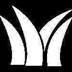 工業用ブラシ素材植物
